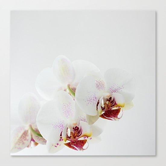 :: orchidea :: Canvas Print