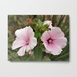 Incarvillea Arguta Rose, Botanical Garden, San Francisco Metal Print