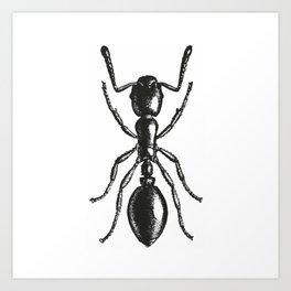 Ant 2 Art Print