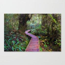 Rainforest Trail, Vancouver Island BC Canvas Print