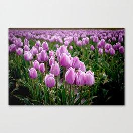 Skagit Valley Tulip Fields Canvas Print