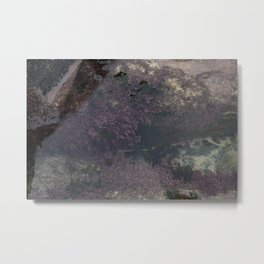 Underwater Rock Pool with Purple Seaweed Metal Print