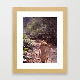 Deer on the Mountain Framed Art Print