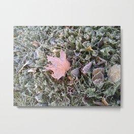 Frost Leaves Metal Print