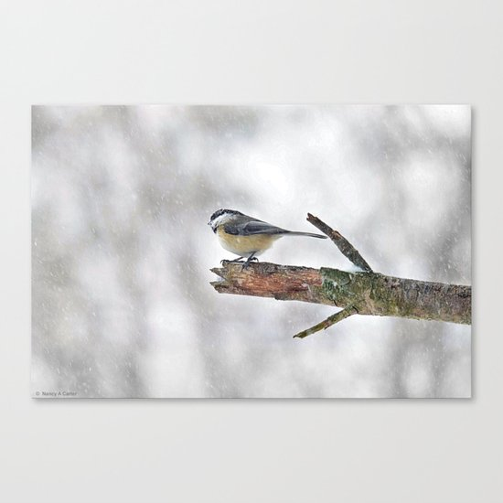 Chickadee Versus Winter Storm Stella Canvas Print