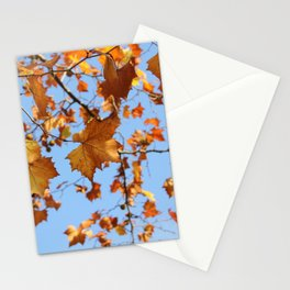 Maple Leaves in Fall and the Sky Photography Stationery Cards