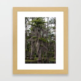 CypressTree and Witch's Hair in Spring Framed Art Print