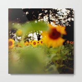 Sonnenblumen im Sommer Metal Print