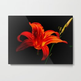 Day Lily Creation Metal Print