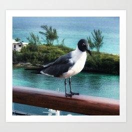 The Pigeon of Nassau Art Print