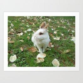 Spring of rabbit Art Print