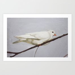Winter Dove Art Print