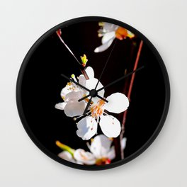 Beautiful, Delicate Japanese Apricot Flowers Against The Black Background Wall Clock