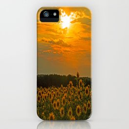 Field of Sunflowers at Sunset iPhone Case