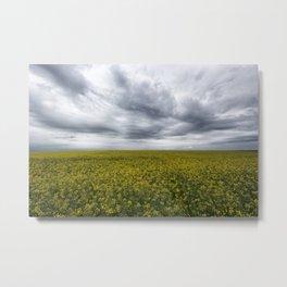 rapeseed field Metal Print