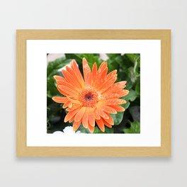 Happy Orange Daisy Framed Art Print