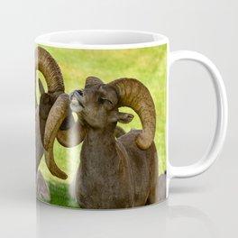 Entangled Horns - Desert Bighorn Rams Coffee Mug