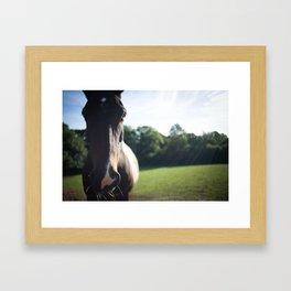 """Munchy"" the Horse Framed Art Print"