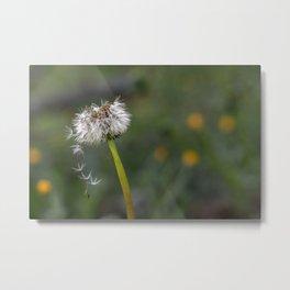 Colourful dandelion Metal Print