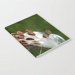 Milkweed pod  Notebook