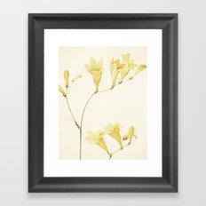 IV. Vintage Flowers Botanical Print by Pierre-Joseph Redouté - Sisyrinchium Collinum Framed Art Print