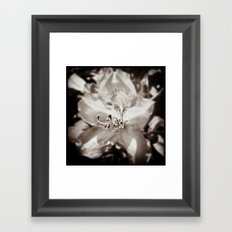 Sweet Seduction Framed Art Print