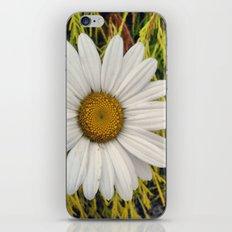 Daisy iPhone & iPod Skin