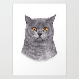 British shorthair colored pencil drawing Art Print