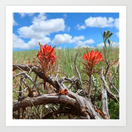 Watercolor Flower, Indian Paintbrush 02, Fossil Butte National Monument, Wyoming Art Print