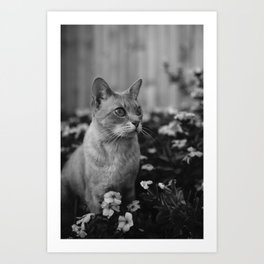 cats and flowers Art Print