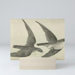 Vintage Print - Chimney Swifts Mini Art Print
