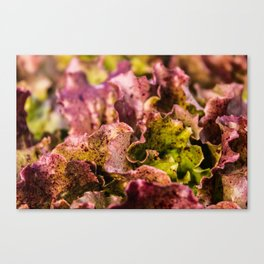 Speckled Lettuce Closeup Canvas Print