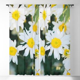 Daisy flower, Asteraceae flower,  daisy hill, Photography, beautiful view, View Poster,  Blackout Curtain