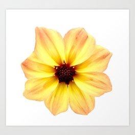 Beautiful Orange and Yellow Flower Art Print