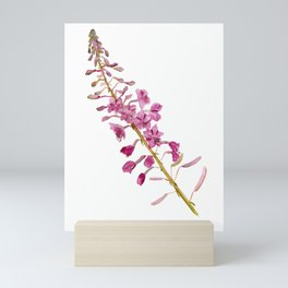 Flowers of fireweed Mini Art Print