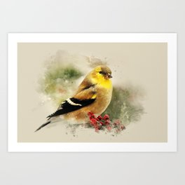 Goldfinch Watercolor Art Art Print