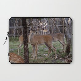 Three Texas Whitetail Bucks Looking for a Doe Laptop Sleeve