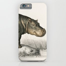 Old Vintage Illustration Of A Hippo iPhone Case