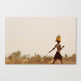 Cat walk Canvas Print