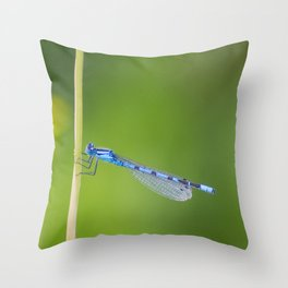 Lovely Blue Damselfly Throw Pillow