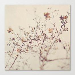 Magnolia tree. Winter Canvas Print