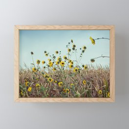 Black-eyed Susans Blowing in the Wind in the Midwest Framed Mini Art Print