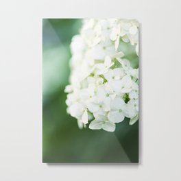 Softly Endearing - Hydrangia in Green Metal Print