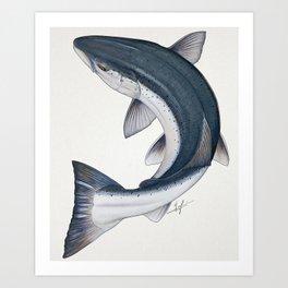 Circling Atlantic Salmon Art Print