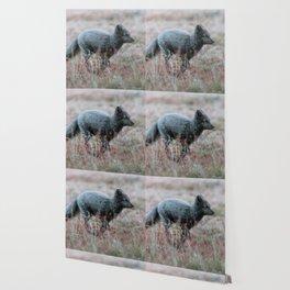 Arctic Fox running through a dream Wallpaper