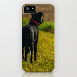 Watching dog iPhone Case