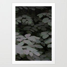 Leaves in the dark Art Print