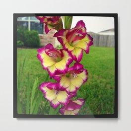 Ocean Breeze Gladiolus 1 Metal Print