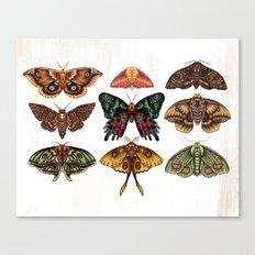 Moth Wings III Canvas Print
