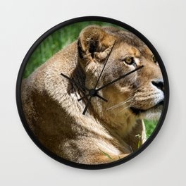 Adorable Fantastic Female African Lion Lying Down In Green Grass Close Up Ultra HD Wall Clock